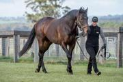 USTINOV x FINNEGAN BEGINEGAN - Buy a Share in a Racehorse Melbourne