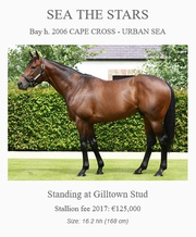 Opportunity To Own A Serious Cups Contender - buy shares in racehorse